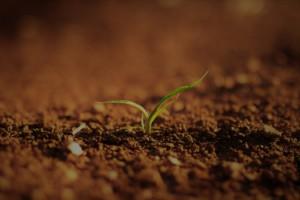 Petite plante verte qui pousse en plein champs